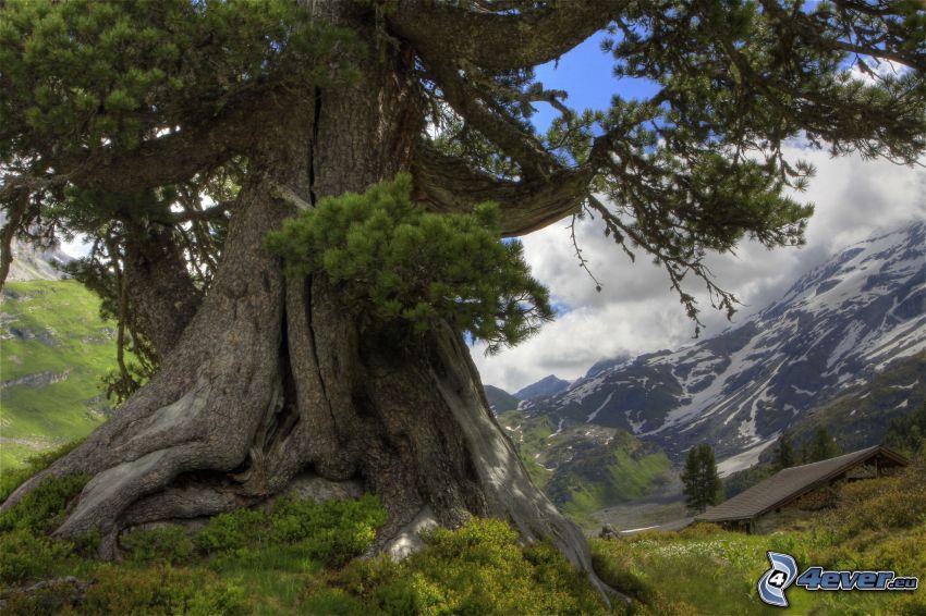 rozgałęzione drzewo, zaśnieżone pasmo górskie