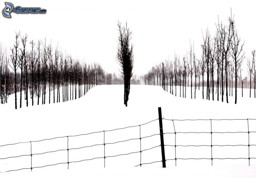 sad, śnieg, ogrodzenie z drutu