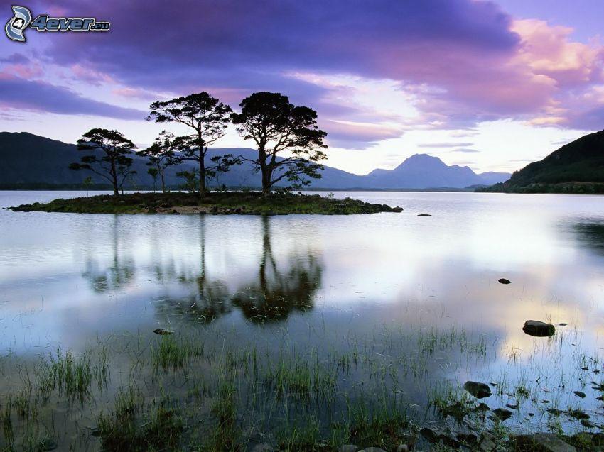 samotne drzewa, Szkocja, wyspa, jezioro, góry, woda