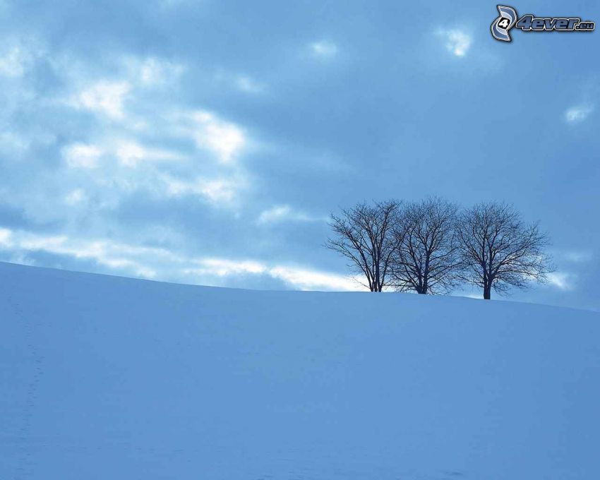 samotne drzewa, zaśnieżona łąka, chmury