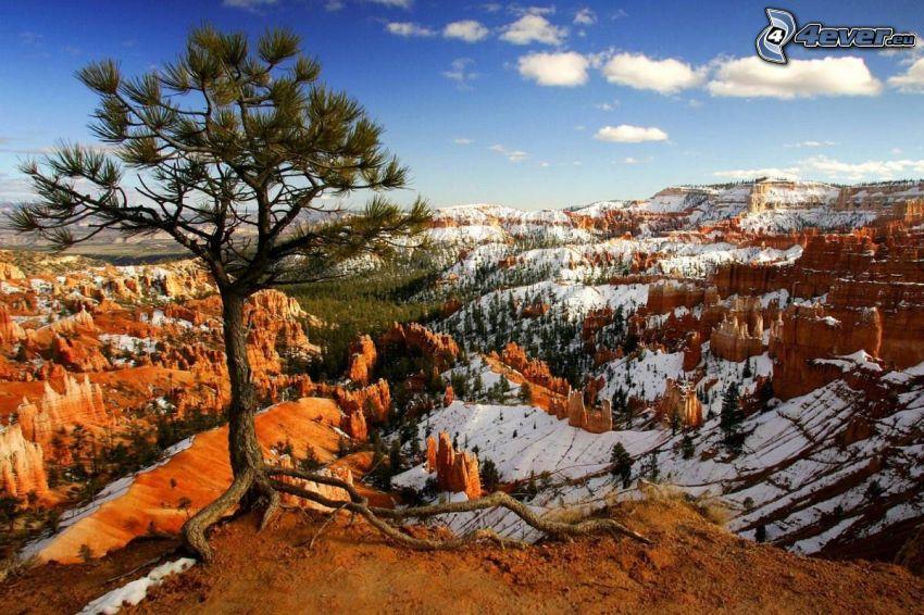 samotne drzewo, dolina, śnieg, widok na krajobraz
