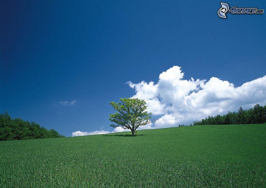 samotne drzewo, łąka, chmury, las