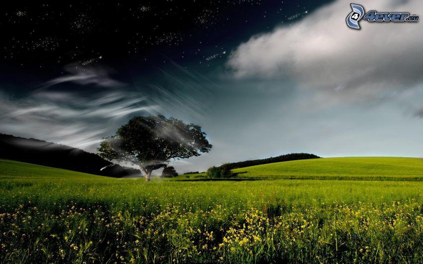 samotne drzewo, łąka, niebo w nocy, chmury