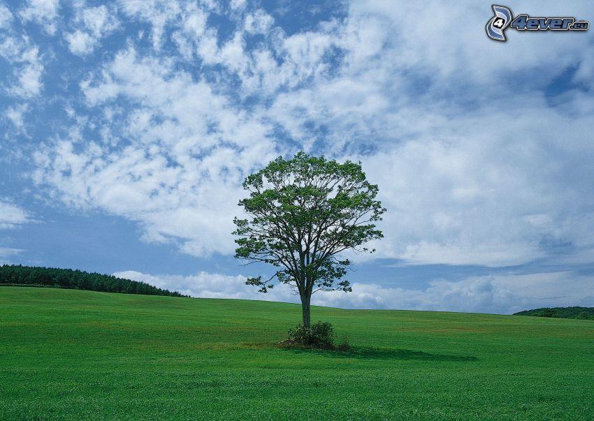 samotne drzewo, łąka, trawa, las