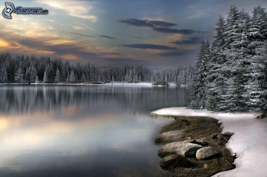 spokojne jezioro zimą, zaśnieżony las