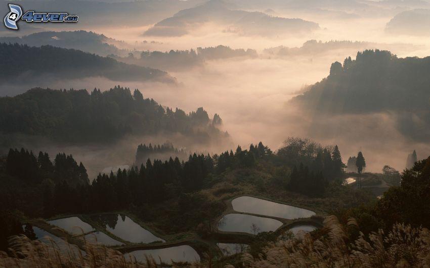 tarasowe jeziorka, mgła, drzewa iglaste, widok