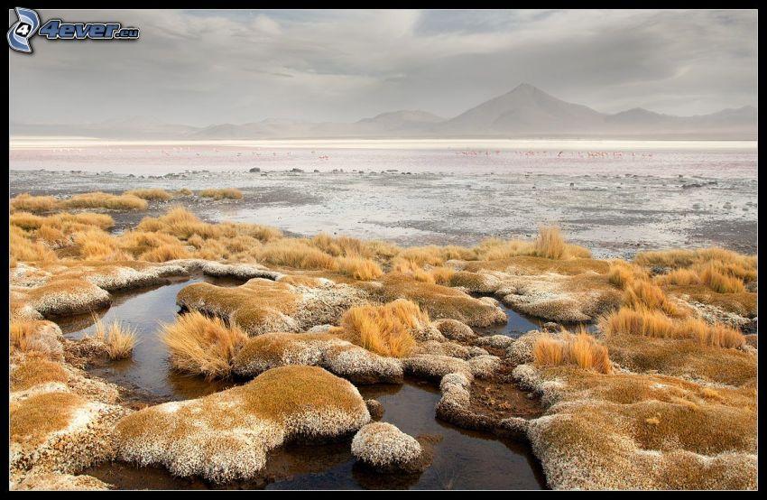 trawa na brzegu jeziora, żółta trawa, ląd