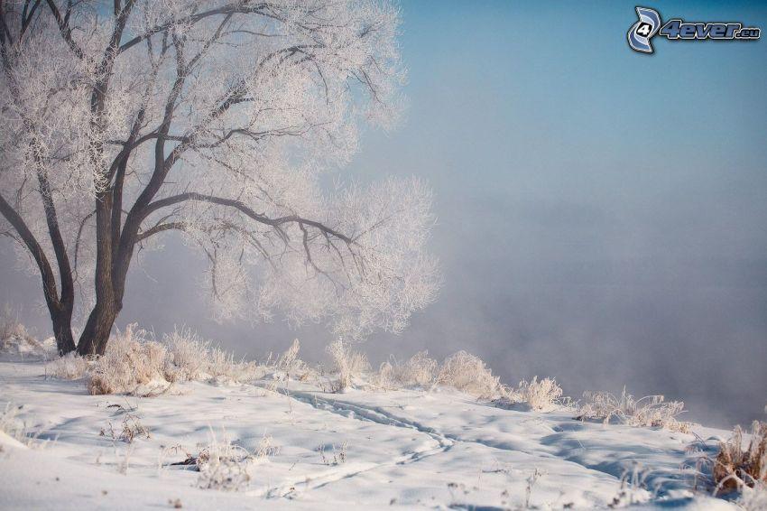zamarznięte drzewo, śnieg