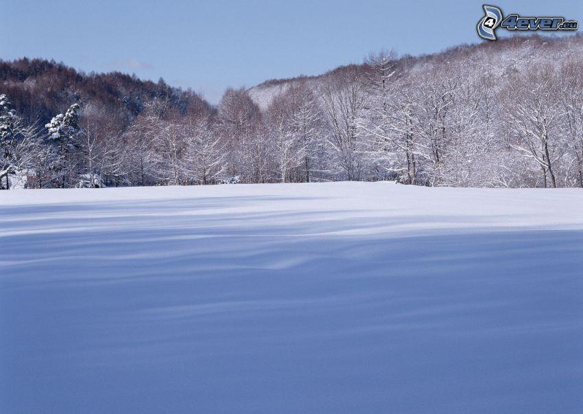 zaśnieżona łąka, drzewa, las, śnieg