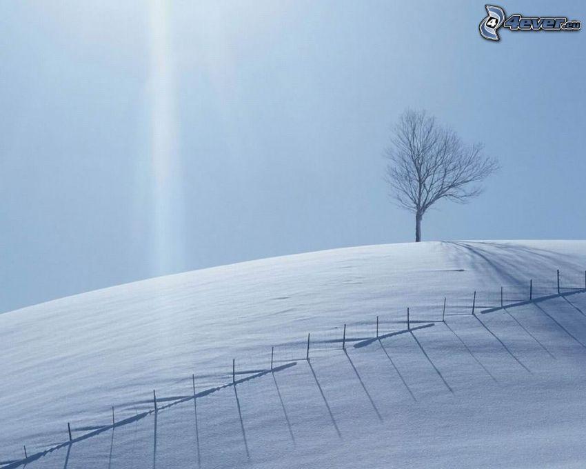 zaśnieżona łąka, drzewo w polu, płot, promienie słoneczne