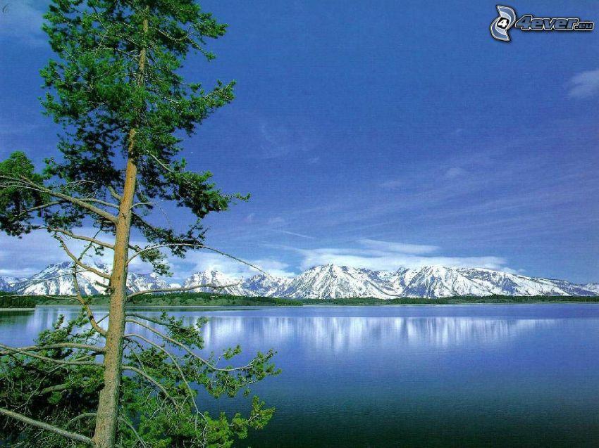 zaśnieżone góry, jezioro, drzewo iglaste, góry, odbicie