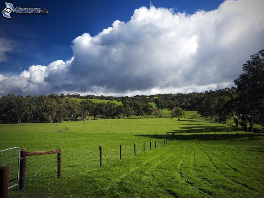 zielona łąka, płot, drzewa, chmury