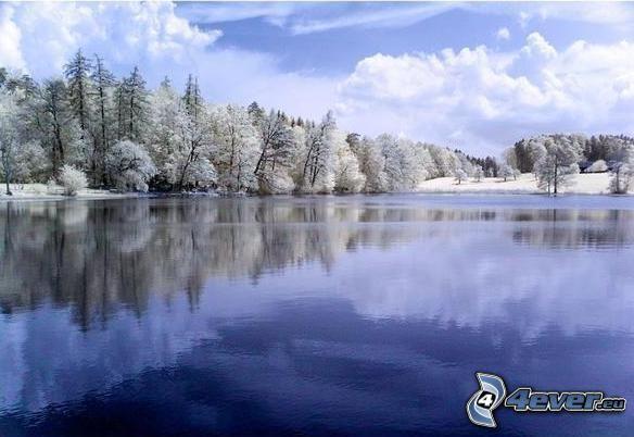 zima, krajobraz, jezioro, niebo, las