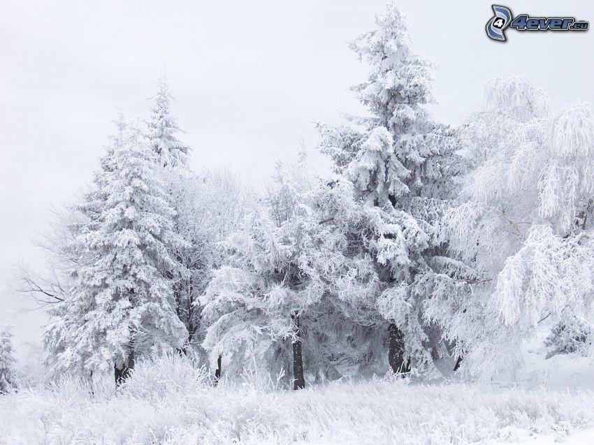 zima, krajobraz