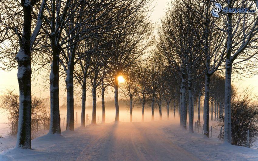 zimowy krajobraz, zaśnieżona droga, drzewa, słońce