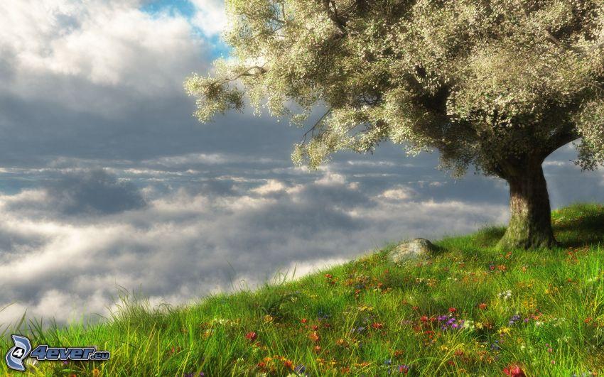 kwitnące drzewo, łąka, chmury, HDR