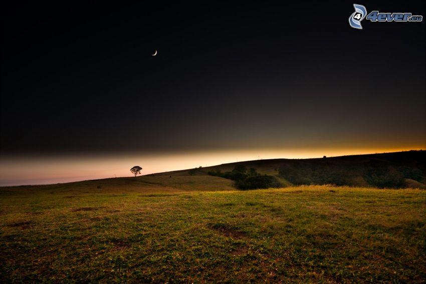 łąka, niebo w nocy, księżyc