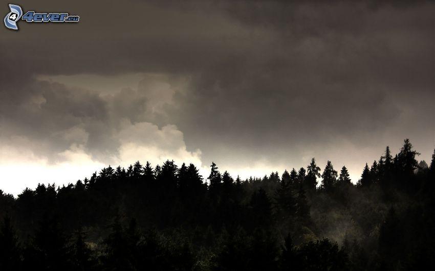 las, ciemne chmury