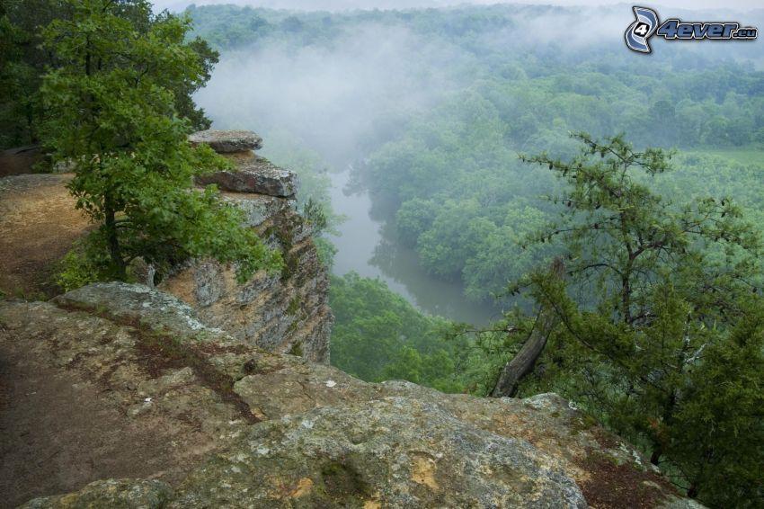 las, skały, mgła