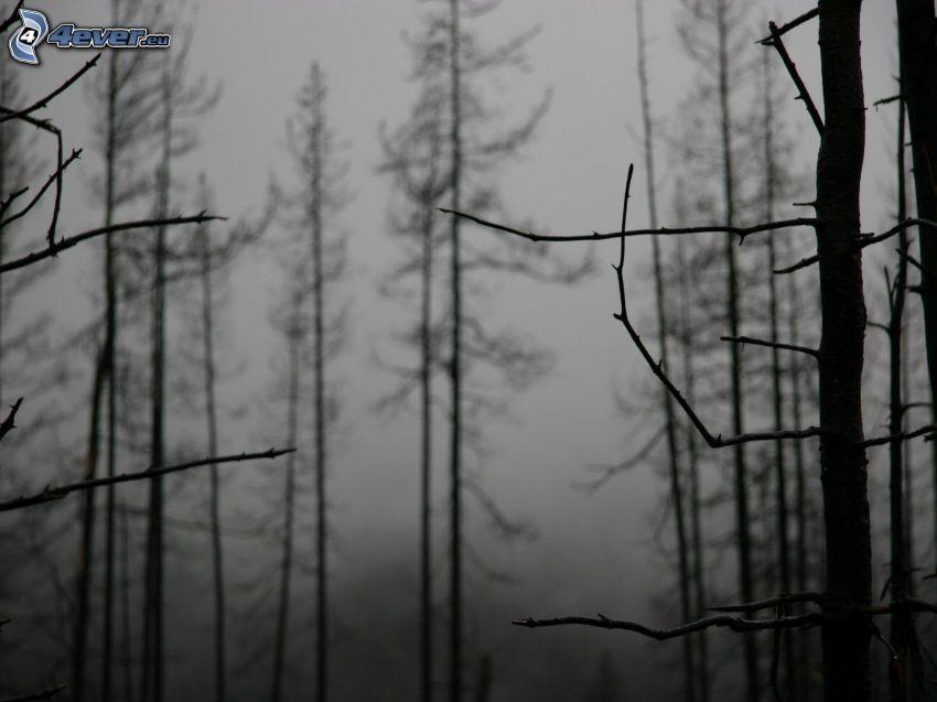 las nocą, czarno-białe zdjęcie