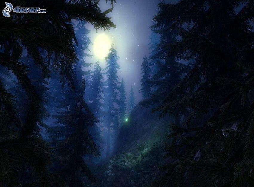las nocą, drzewa iglaste, księżyc