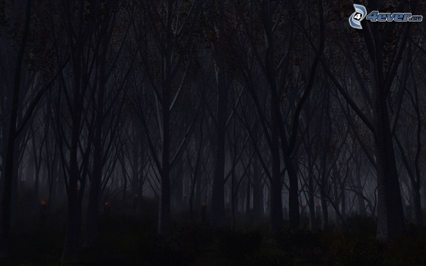 las nocą