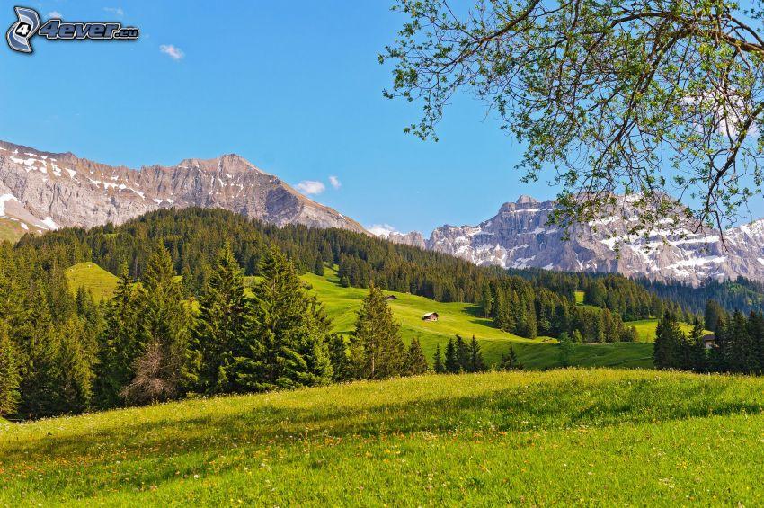 lasy i łąki, pasmo górskie, Szwajcaria