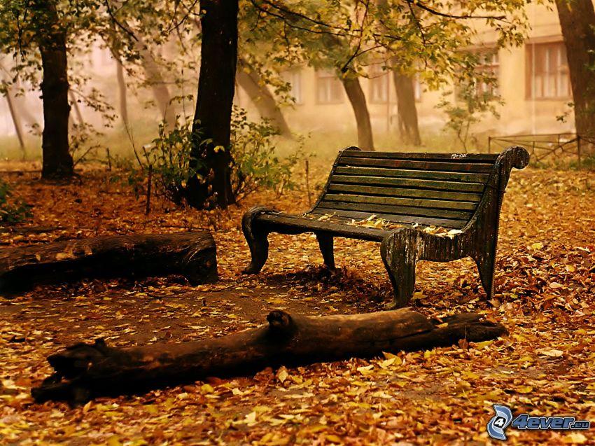 ławeczka, drewno, opadnięte liście