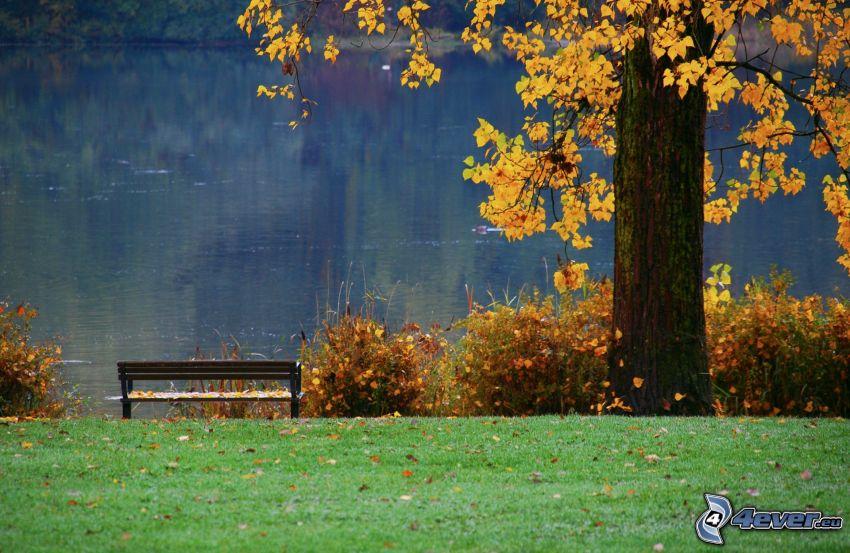 ławeczka nad jeziorem, żółte drzewo