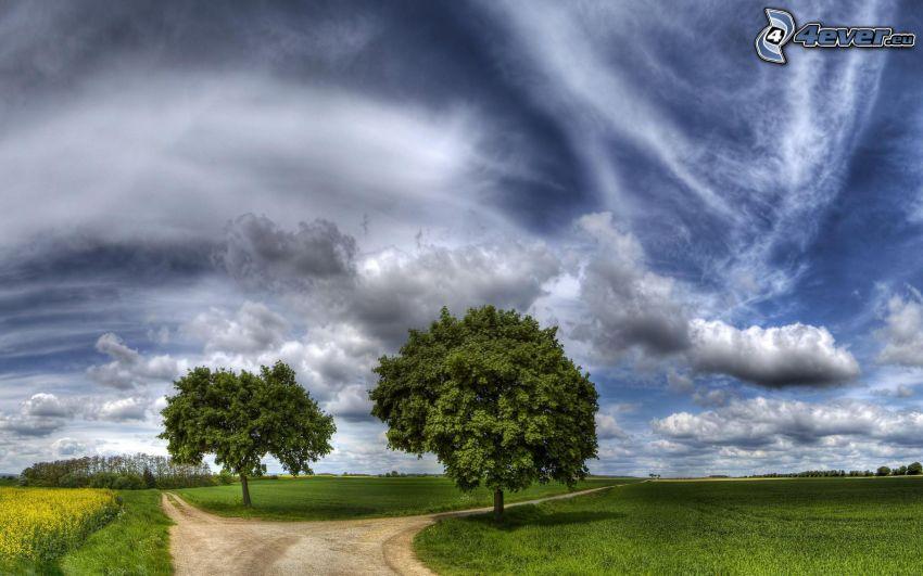 leśna droga, rozdroże, drzewa, chmury
