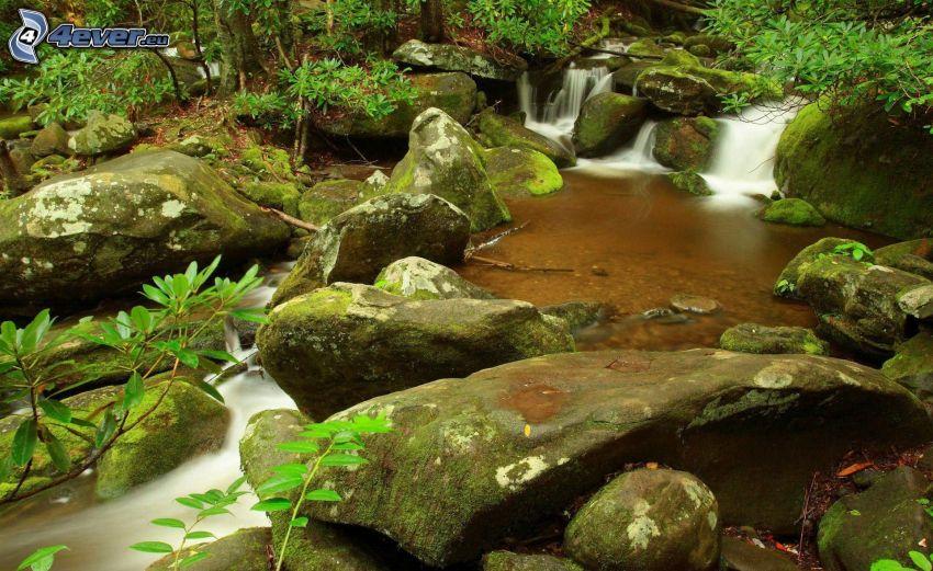 leśny strumyk, kamienie, zieleń