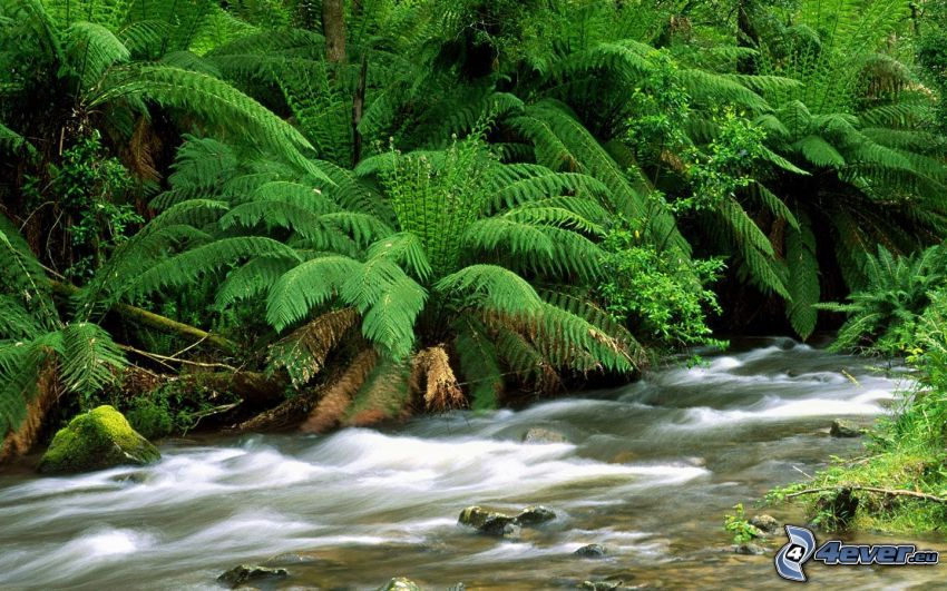 leśny strumyk, paprocie, zieleń