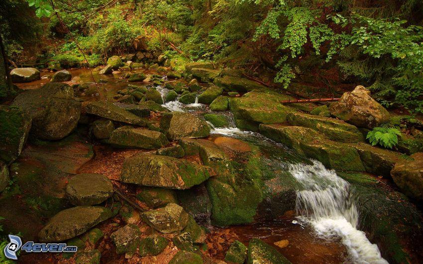 leśny strumyk, skały