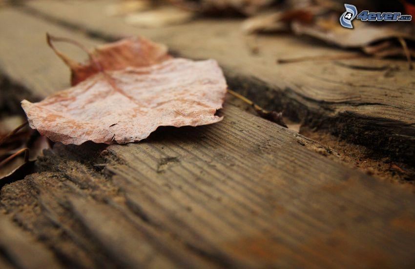liść, drewno