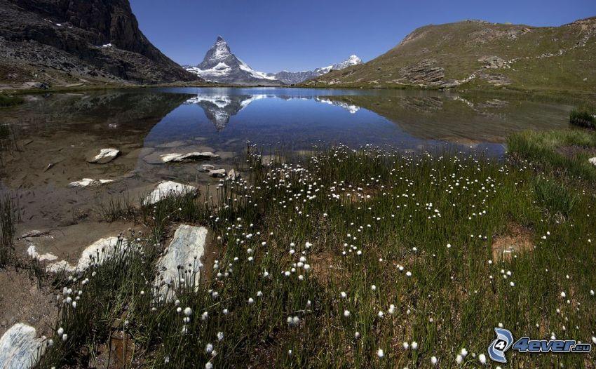 Matterhorn, górskie jezioro, zaśnieżona góra, trawa, białe kwiaty