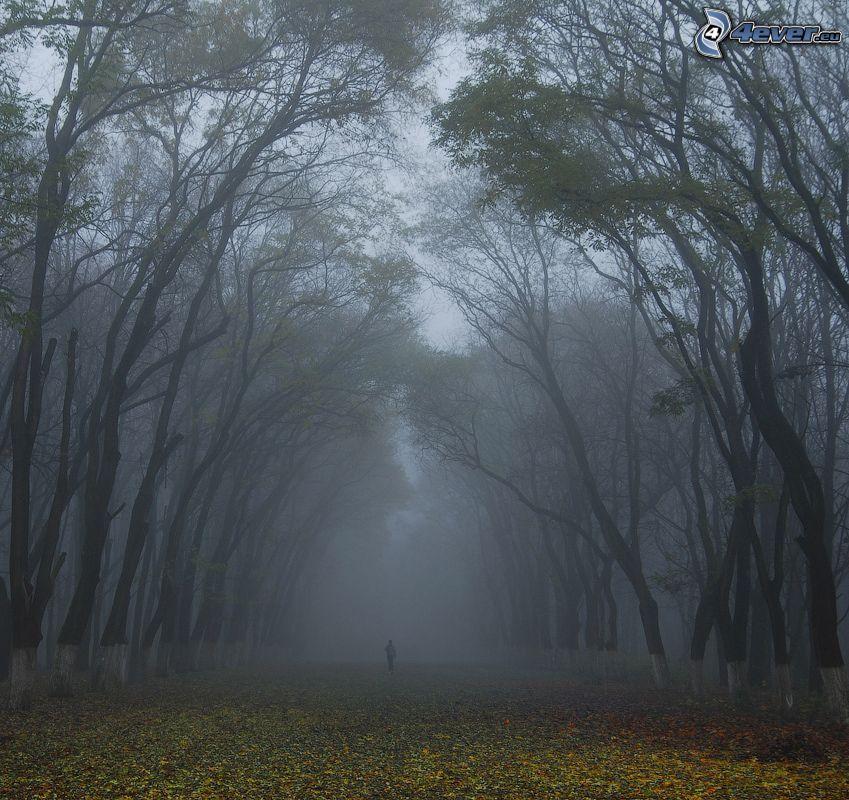 mgła w lesie, opadnięte liście, człowiek