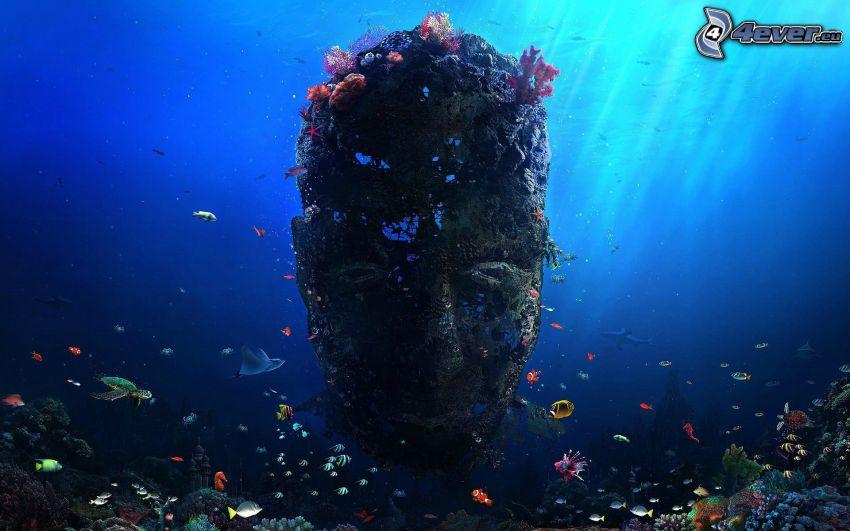 morskie dno, twarz, koralowce, koralowe ryby