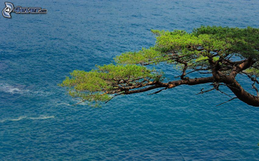 drzewo, morze