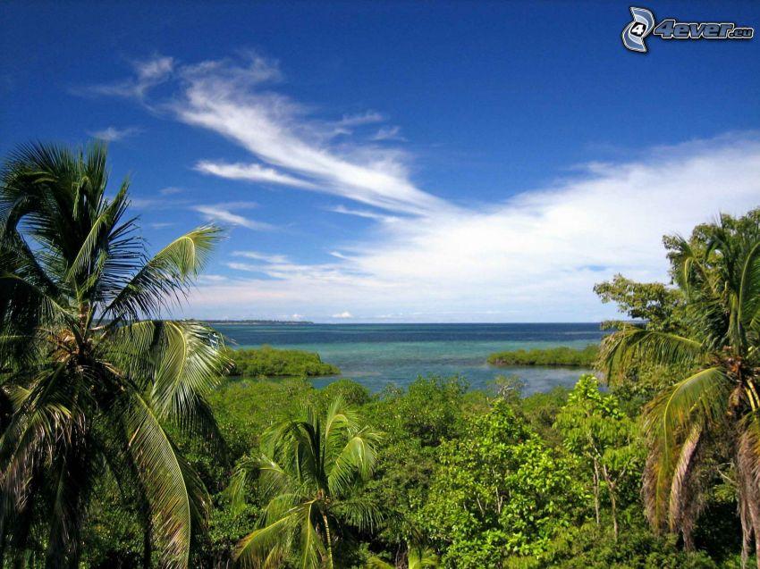 dżungla, wyspa, morze, wybrzeże