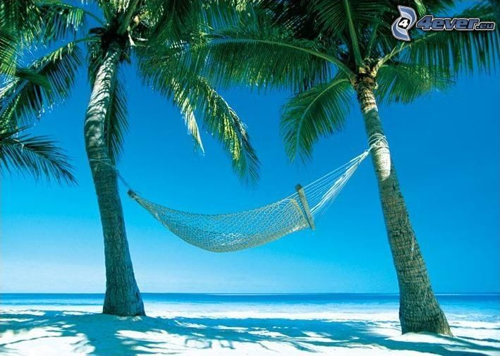 hamak, palmy na plaży, piasek, morze, wakacje