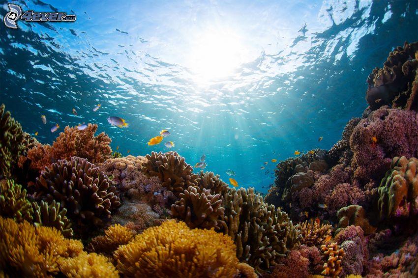 koralowce, morskie dno, promienie słoneczne, koralowe ryby