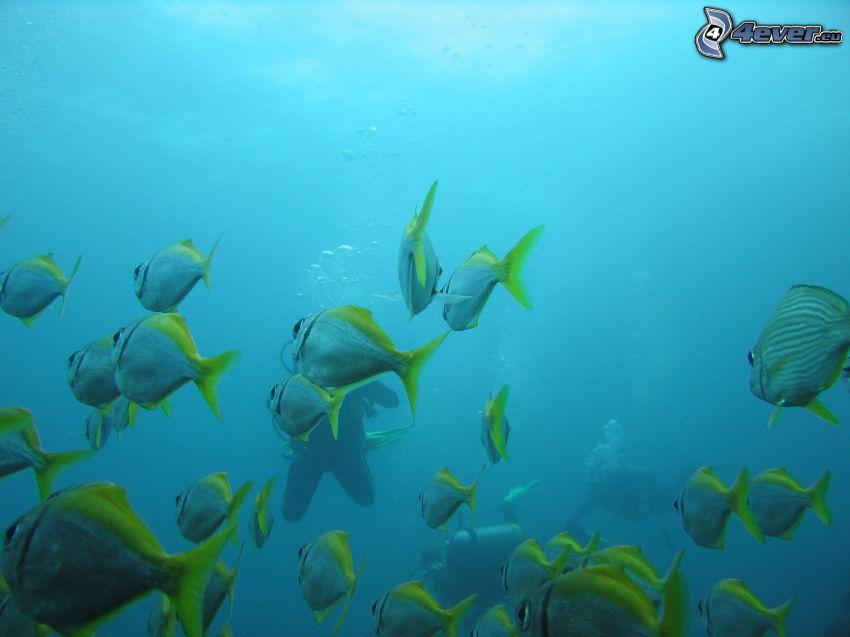 ławica ryb