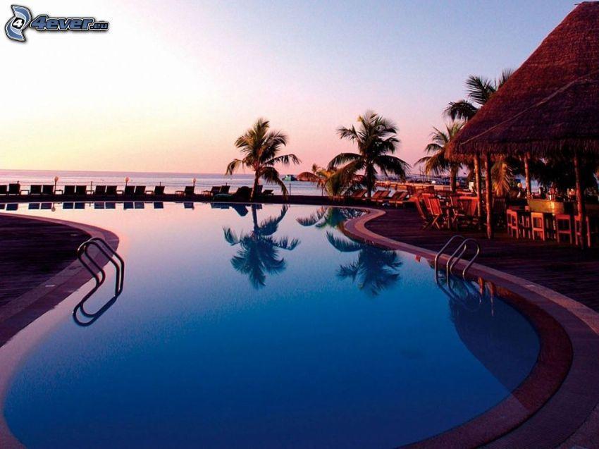Malediwy, basen, taras, palmy