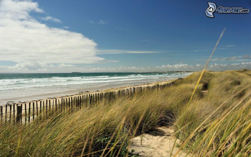 morze, wysoka trawa, drewniany płot