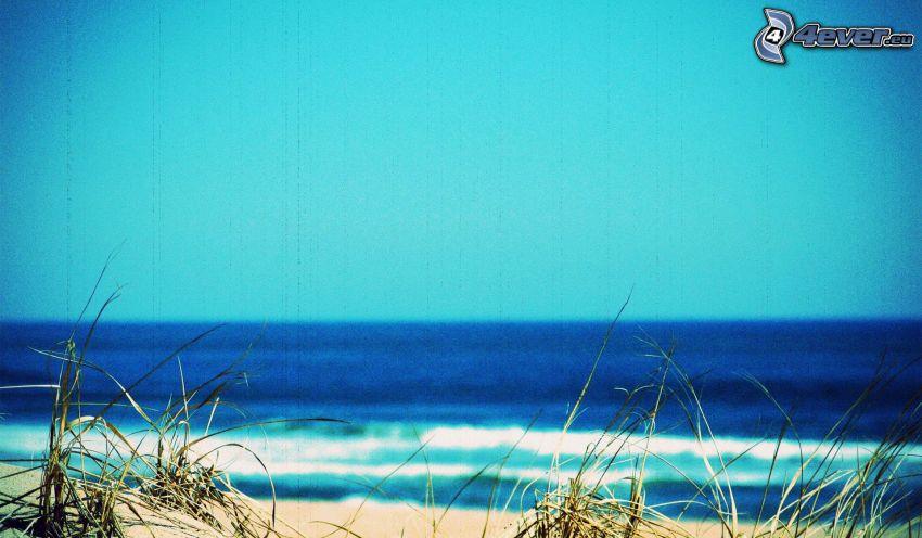 morze, źdźbła trawy