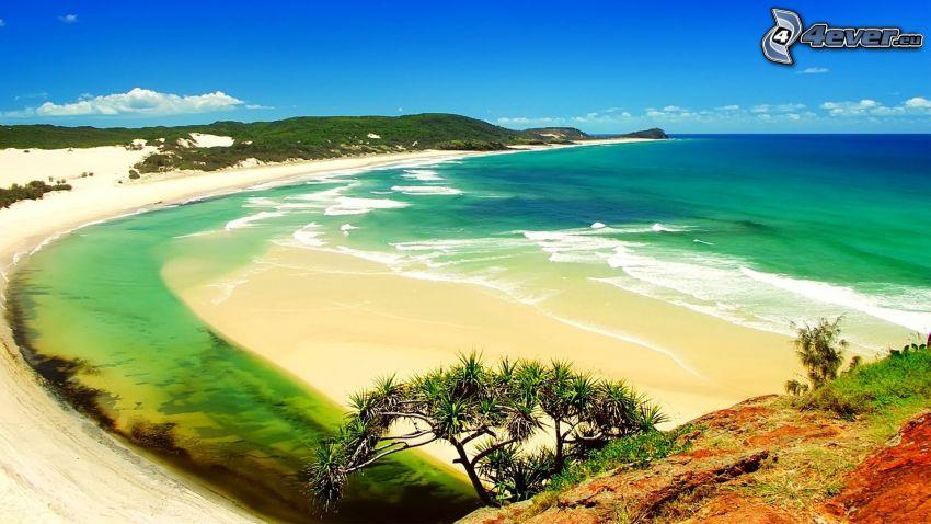 morze otwarte, wybrzeże, drzewo