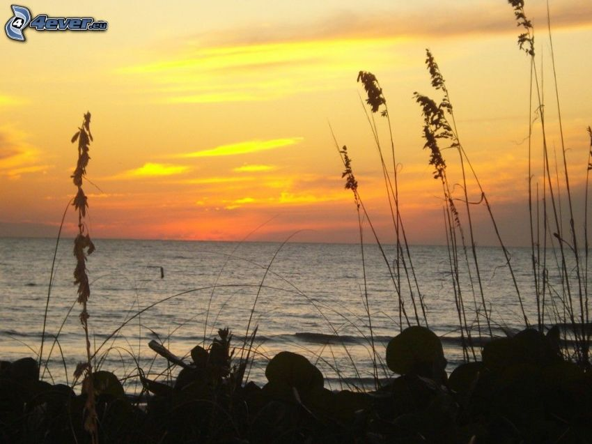 morze otwarte, wysoka trawa, po zachodzie słońca
