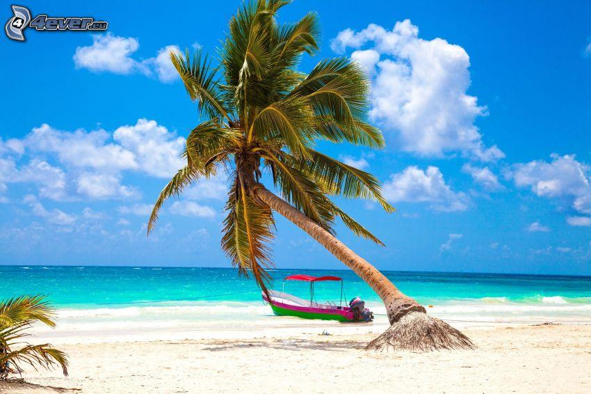 palma na piaszczystej plaży, morze otwarte, statek