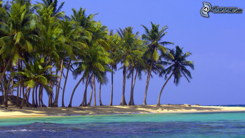 palmy na plaży, wybrzeże, lazurowe morze