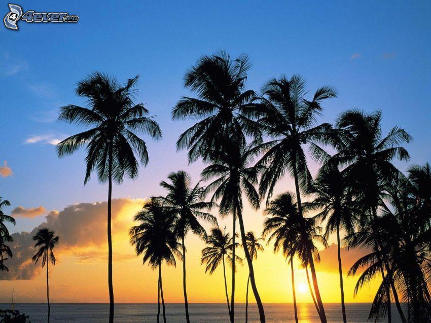 palmy przy zachodzie słońca, morze otwarte